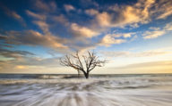 A tree on Folley Beach in Charleston, South Carolina. Explore south east America