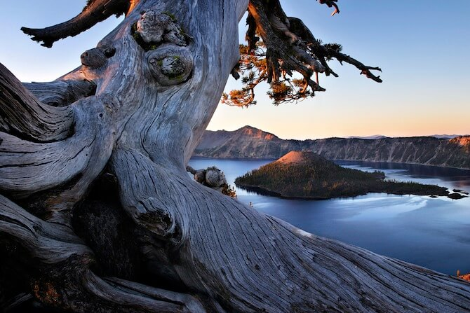Crater Lake, Oregon, USA - Tree above Crater Lake