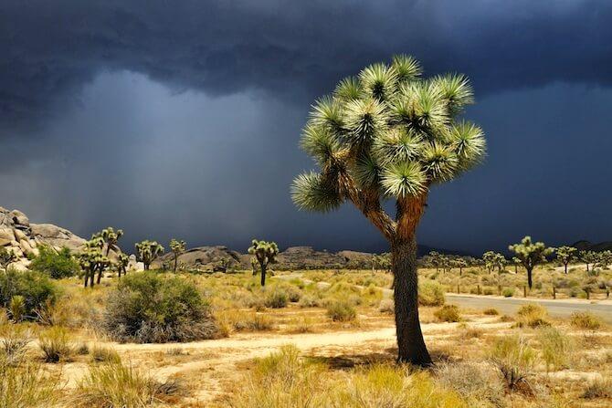 Joshua Tree National Park, California, USA - Storm clouds over Joshua