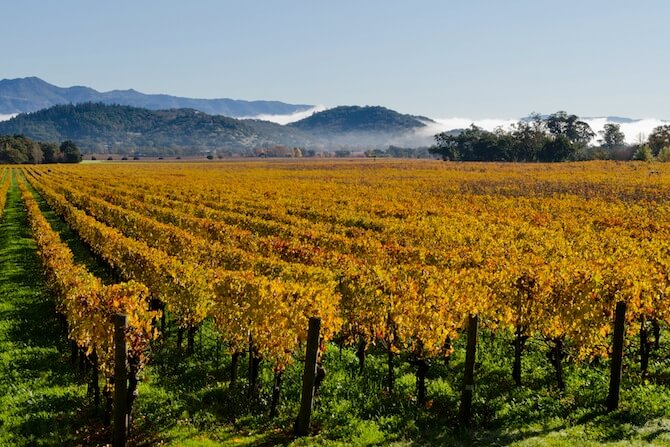 Napa Valley, California - Vineyard in mist