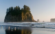 Beach within Olympic National Park
