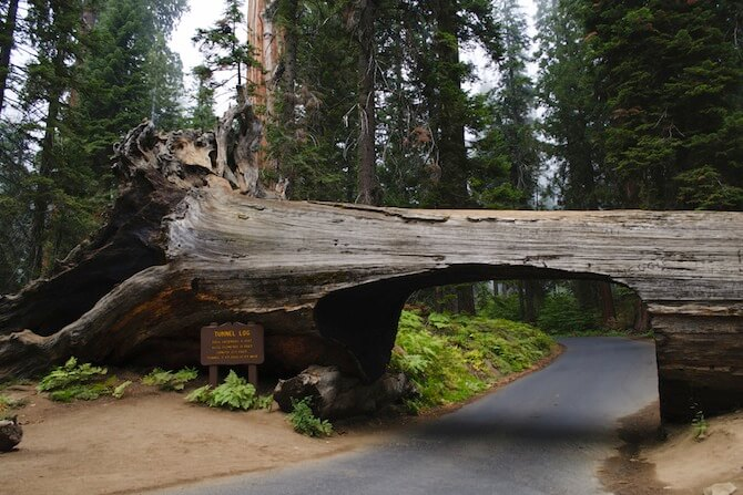 Sequoia NP - Tunnel Log at Sequoia National Park in California, USA