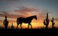 Texas, USA American Roadtrip Holiday