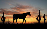 Horse sillhouette against the sunset, Texas Triangle